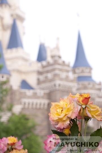 バラとシンデレラ城