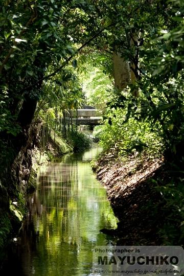新緑が綺麗な小川